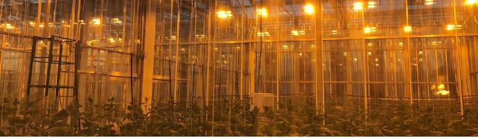 Greenhouse Hackathon - Künstliche Intelligenz für die Ernährung der Welt