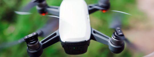 KI und Naturschutz: Mit digitalen Innovationen auf Schädlingsjagd
