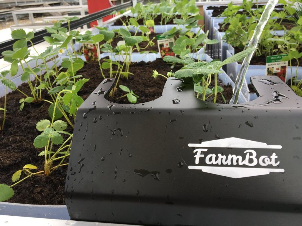 FarmBot, an example for how IT technology can help the farming sector facing future challenges. The picture shows a FarmBot plot with strawberries.