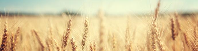 Smart Farming: IT in der Landwirtschaft der Zukunft. Das Farmbot-Netzwerk.