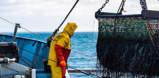 Een toekomstbestendig visbedrijf met SAP S/4HANA