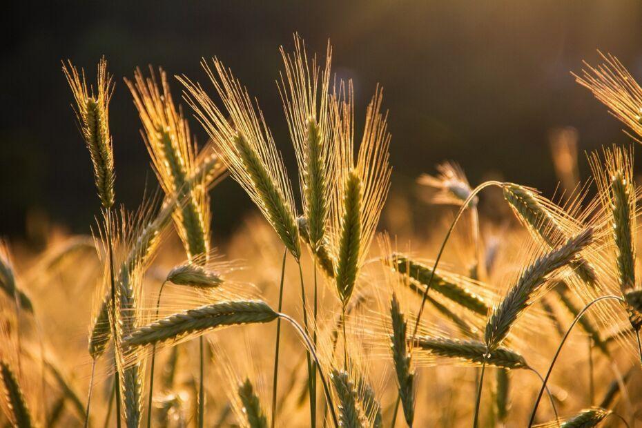 Agri-Food